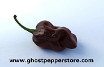 Fresh Chocolate Habanero 1lb