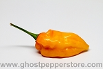 Fresh Yellow Fatalii Peppers 5lb BOX!