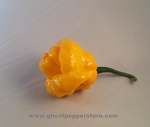 Fresh Yellow Scotch Bonnet 5lb BOX!