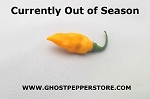 Fresh Datil Pepper 2oz