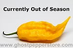 Fresh Yellow Ghost Peppers 1 Lb
