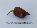 10 Seeds - Chocolate Trinidad Scorpion