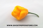 10 Seeds - Yellow Trinidad Scorpion