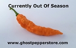 Fresh Peach Ghost Peppers 4oz
