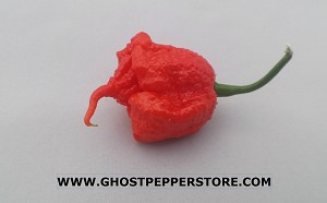 Fresh Carolina Reaper 4oz