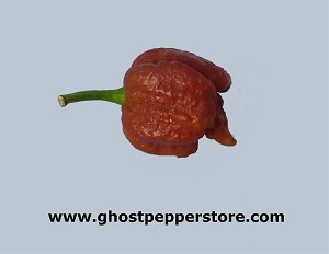 Fresh Chocolate Moruga Scorpion 4oz