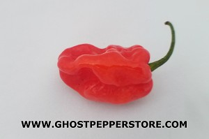 Fresh Red Habanero 4oz